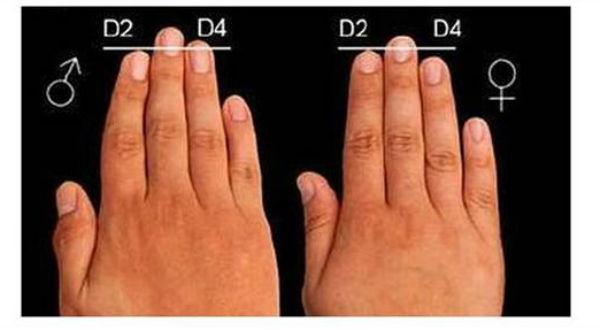 dedos-hormonas2