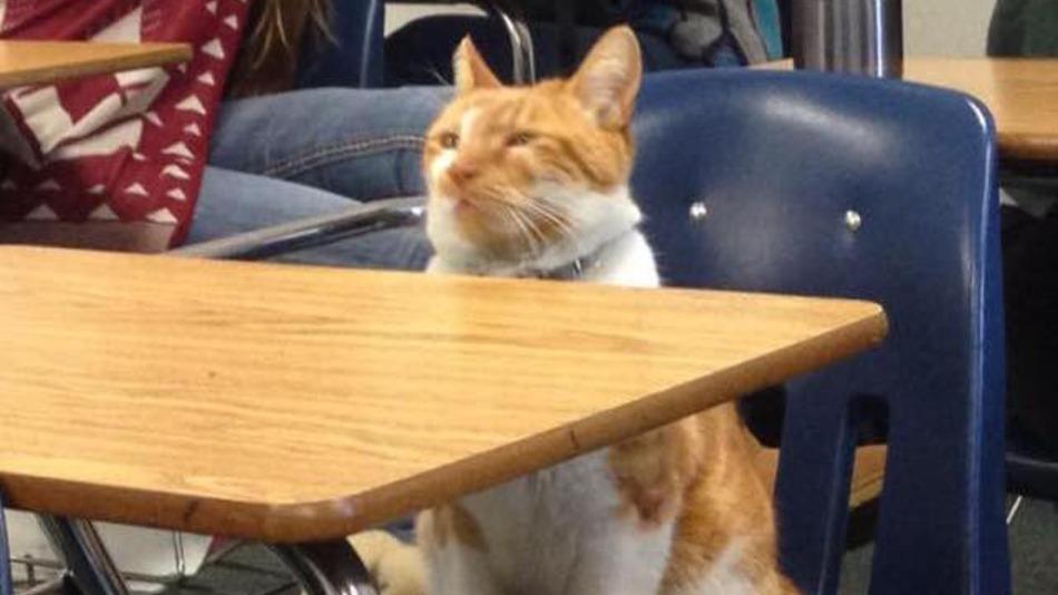 Escuela-Gato-Bubba-1