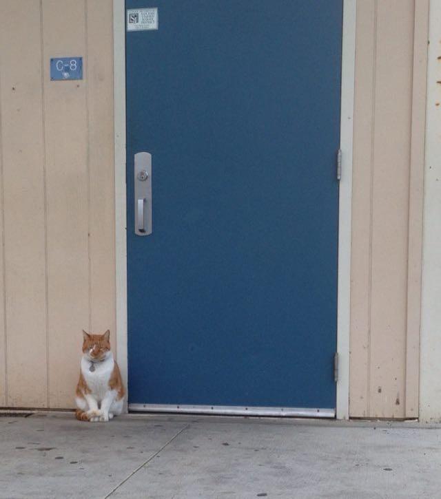 Escuela-Gato-Bubba-2