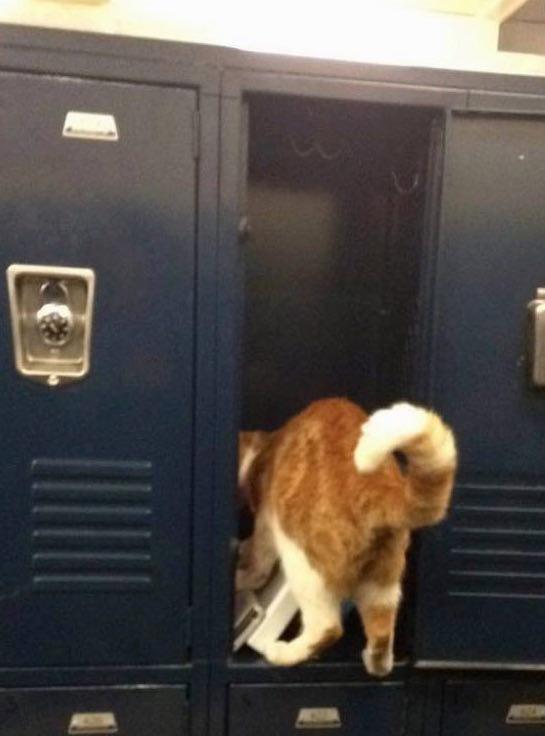 Escuela-Gato-Bubba-3