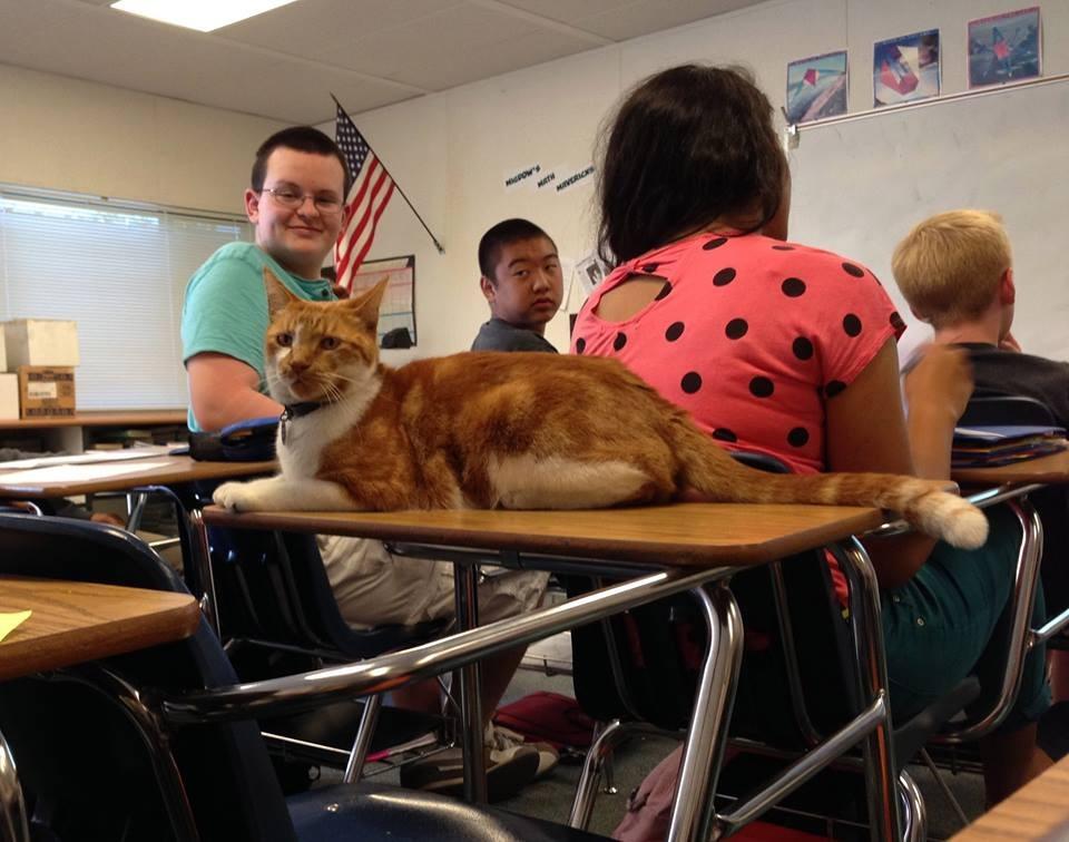 Escuela-Gato-Bubba-4