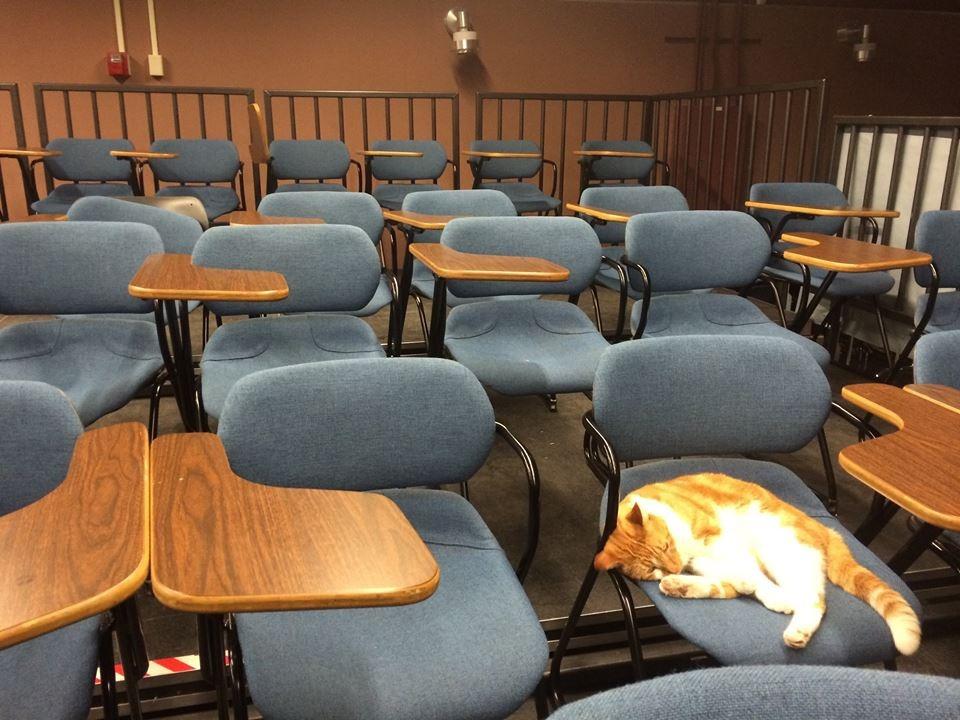 Escuela-Gato-Bubba-6
