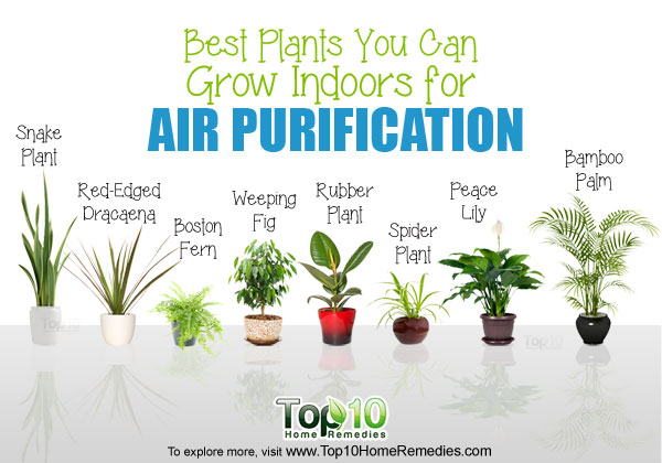 plants-air-purification-1
