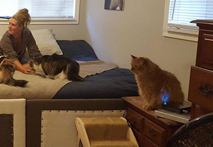super-cama-pareja-perros-gatos-4