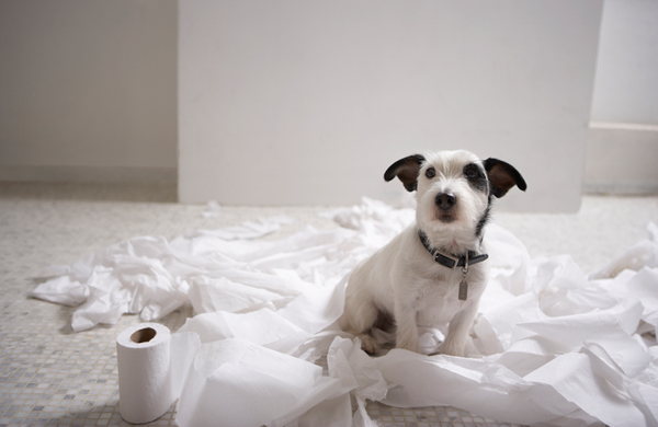 Para que las mascotas no se orinen dentro de casa